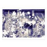 Star-shaped Flowers Sparkle, Postcard Post Card