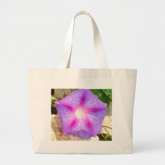 Star Shaped Morning Glory With Glistening Water Bag