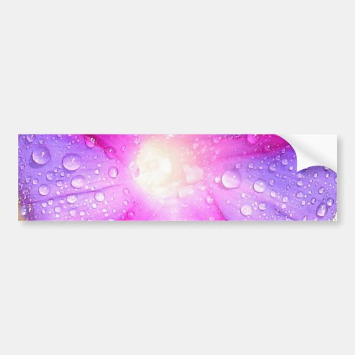 Star Shaped Morning Glory With Glistening Water Car Bumper Sticker