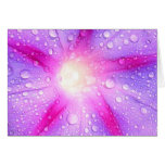 Star Shaped Morning Glory With Glistening Water Greeting Card