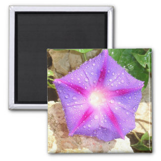 Star Shaped Morning Glory With Glistening Water Magnet