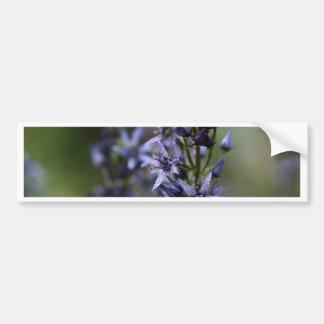 Star swertia (Swertia perennis) Bumper Sticker