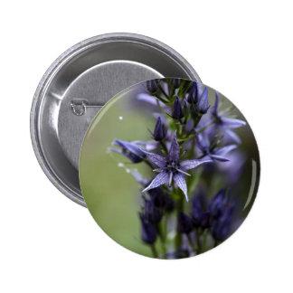 Star swertia (Swertia perennis) Button