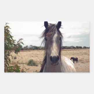 Star The Arab Horse, Rectangular Sticker