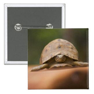 Star tortoise, Perinet Reserve, Madagascar Button