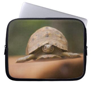 Star tortoise, Perinet Reserve, Madagascar Computer Sleeve