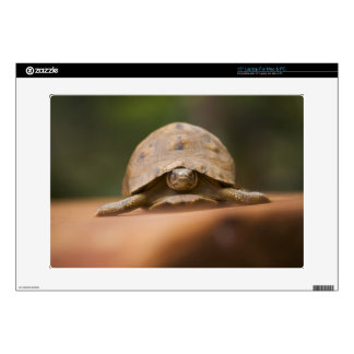 Star tortoise, Perinet Reserve, Madagascar Decals For Laptops