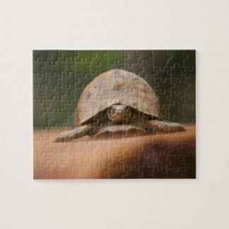 Star tortoise, Perinet Reserve, Madagascar Jigsaw Puzzle