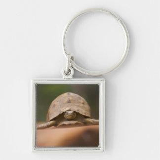 Star tortoise, Perinet Reserve, Madagascar Keychain