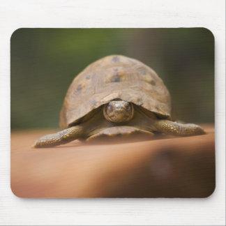 Star tortoise, Perinet Reserve, Madagascar Mouse Pad