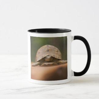 Star tortoise, Perinet Reserve, Madagascar Mug