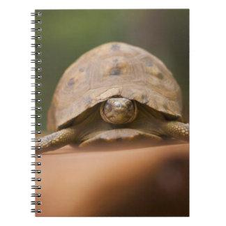 Star tortoise, Perinet Reserve, Madagascar Notebook