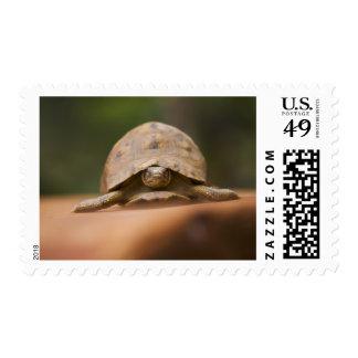 Star tortoise, Perinet Reserve, Madagascar Postage Stamp