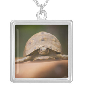 Star tortoise, Perinet Reserve, Madagascar Silver Plated Necklace