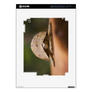 Star tortoise, Perinet Reserve, Madagascar Skin For iPad 3