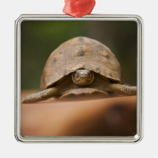 Star tortoise, Perinet Reserve, Madagascar Square Metal Christmas Ornament