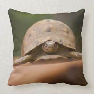 Star tortoise, Perinet Reserve, Madagascar Throw Pillow