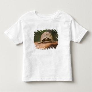 Star tortoise, Perinet Reserve, Madagascar Toddler T-shirt