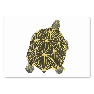 Star Tortoise Turtle Custom Flashcards Table Cards