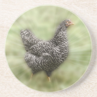 Starburst Chicken Young Barred Plymouth Rock Hen Coasters