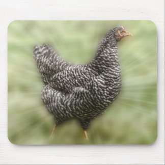 Starburst Chicken Young Barred Plymouth Rock Hen Mouse Pad