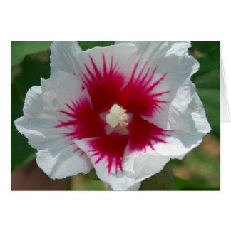 Starburst Flower Card