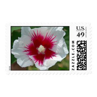 Starburst Flower Stamps