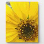 Starburst Sunflower Display Plaques