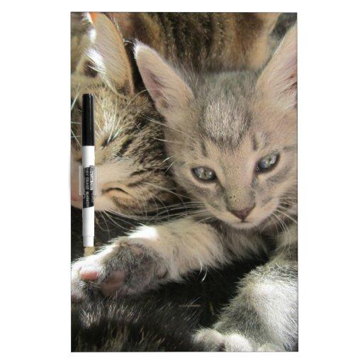 Stardust Kittens Dry-Erase Whiteboards