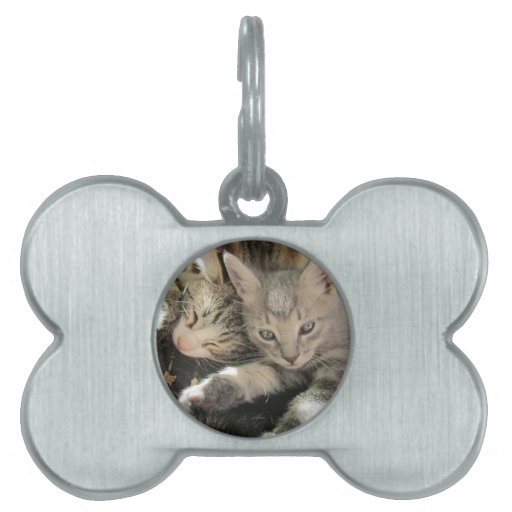 Stardust Kittens Pet Name Tag