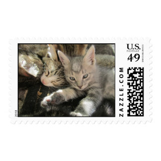 Stardust Kittens Postage Stamps