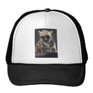 Staredown Trucker Hat