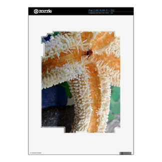 Starfish and Beach Glass Decals For iPad 2