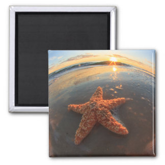 Starfish and Bubbles at Sunset Magnet