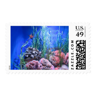 Starfish and Coral Postage Stamps