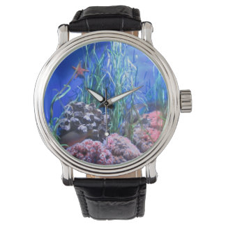 Starfish and Coral Watch