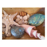 Starfish and shells in wooden basket poster