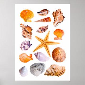 Starfish and Shells Print Poster