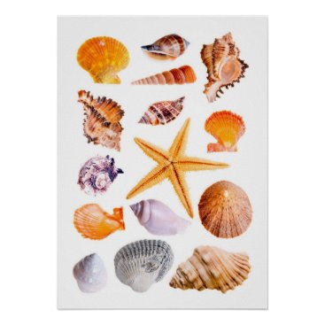 Beach Themed Starfish and Shells Print Poster