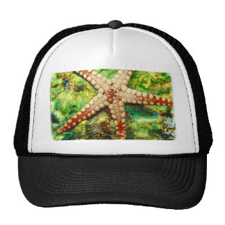 Starfish Aquatic Animal Digital Art -JungleWalk Trucker Hat