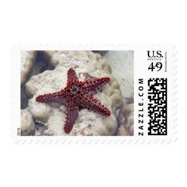 Beach Themed Starfish Beach Ocean Life Stamp