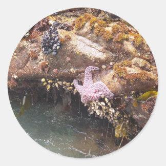 Starfish Classic Round Sticker
