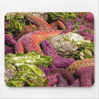 Starfish Closeup Photo Mousepad