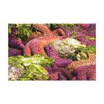 Starfish Closeup Photo Stretched Canvas Print