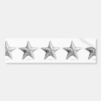 Starfish Drawing Black & White Sea Star Art Car Bumper Sticker