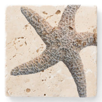 Starfish Drink Coasters Stone