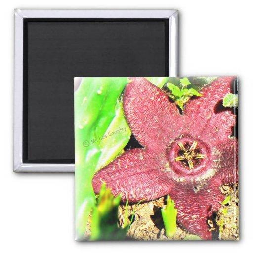 Starfish Flower - Purple Cactus/Succulent Flower 2 Inch Square Magnet