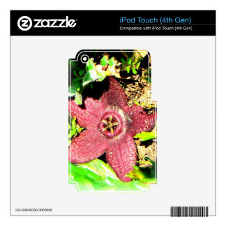 Starfish Flower - Purple Cactus/Succulent Flower iPod Touch 4G Decals