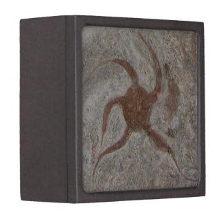 Starfish Fossil Gift Box
