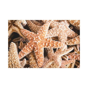 Beach Themed Starfish Grouping Canvas